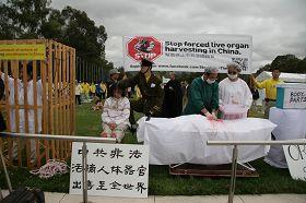 模拟演示,揭露中共酷刑迫害法轮功学员并活体摘取器官