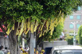 凯达格兰大道上挂满黄丝带,呼吁台湾政府紧急营救钟鼎邦。