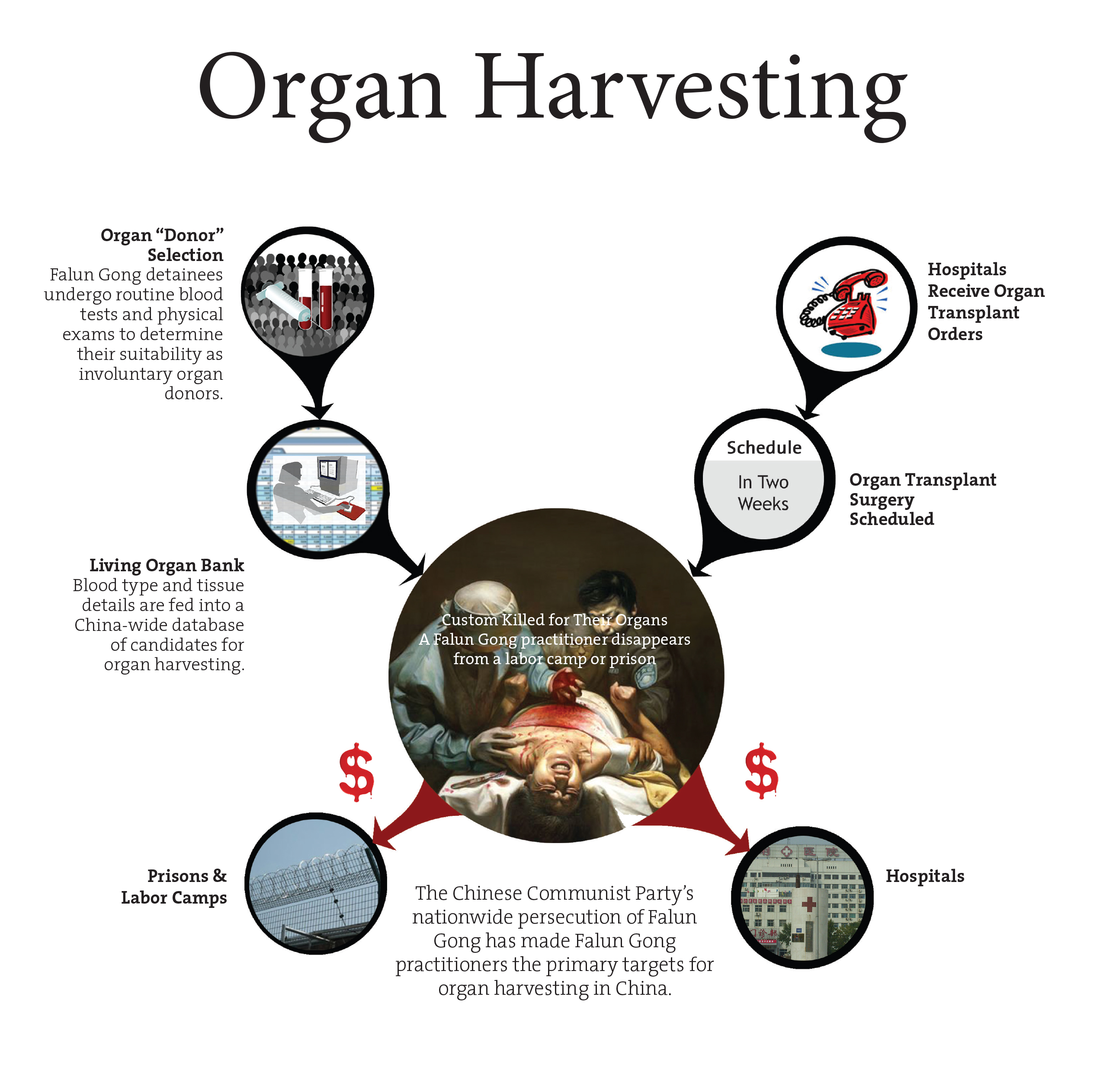 organ harvesting in china essay Essay contest 2018 podcast vib asia join our staff oct 14 oct 14 transplant tourists unwitting beneficiaries of prisoner  in china's organ-harvesting.